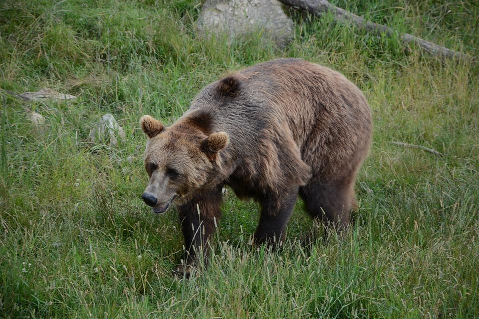 Boras dierentuin zweden