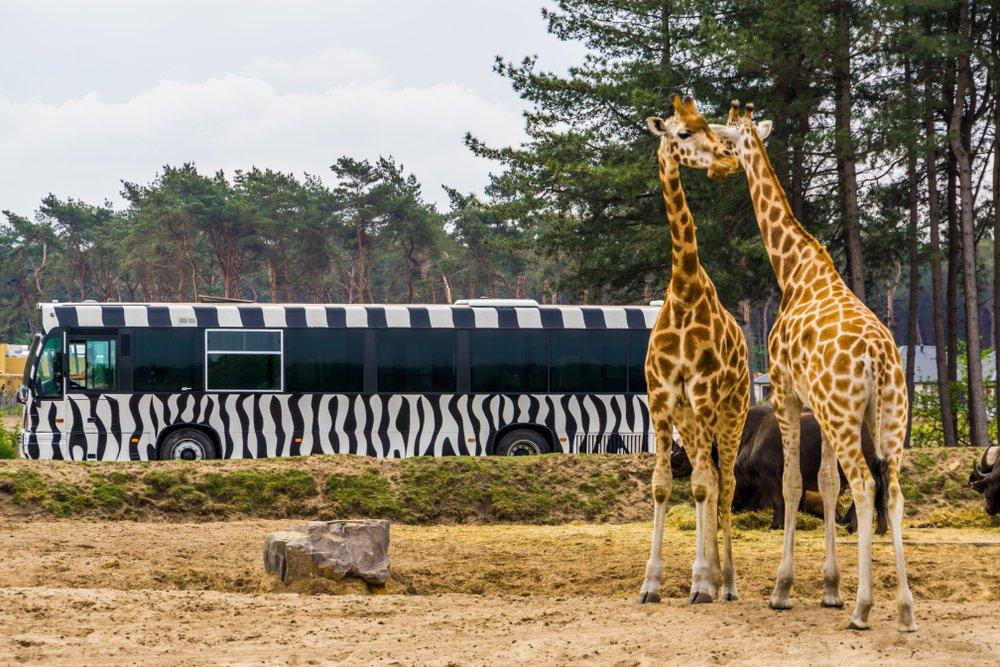Noord-Brabant Safaripark Beekse Bergen