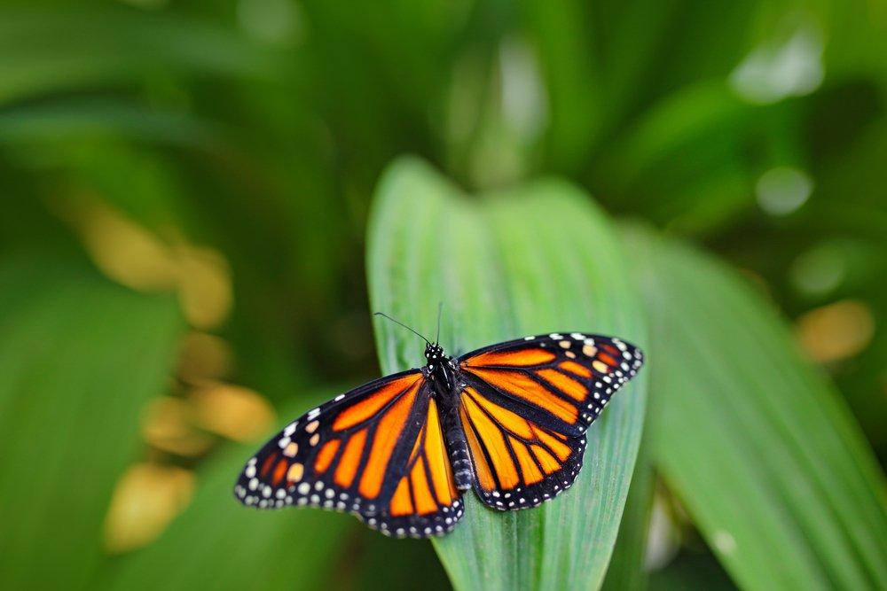 Vlindertuin Noord-Brabant