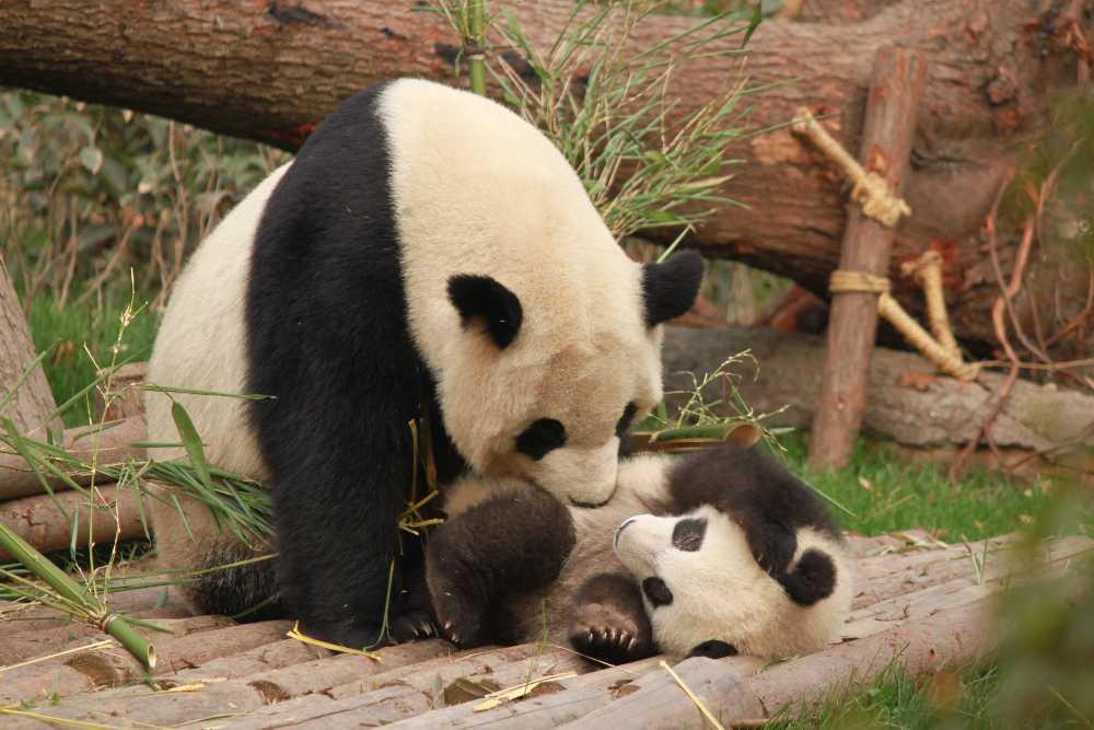De leukste dierentuin van Nederland